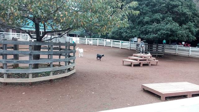 ふなばしアンデルセン公園の動物