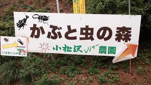 小沢松レジャー農園カブトムシの森