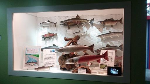 多摩六都科学館魚の模型