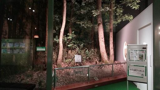 多摩六都科学館雑木林
