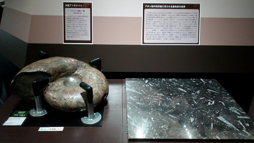 多摩六都科学館化石