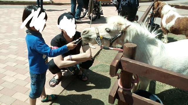 富士サファリパーク馬に餌やり体験