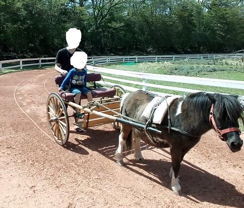 富士サファリパーク乗馬体験