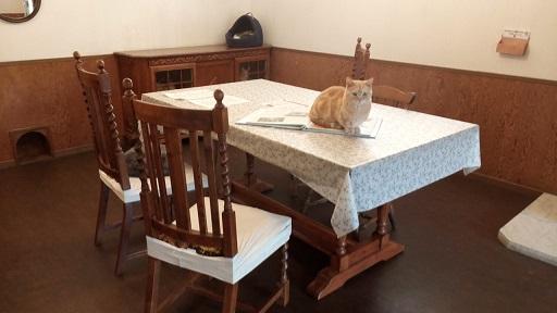 富士サファリパーク猫の館