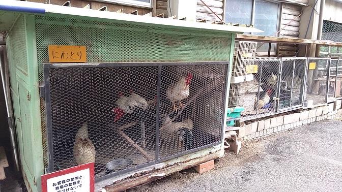 榎本牧場鶏