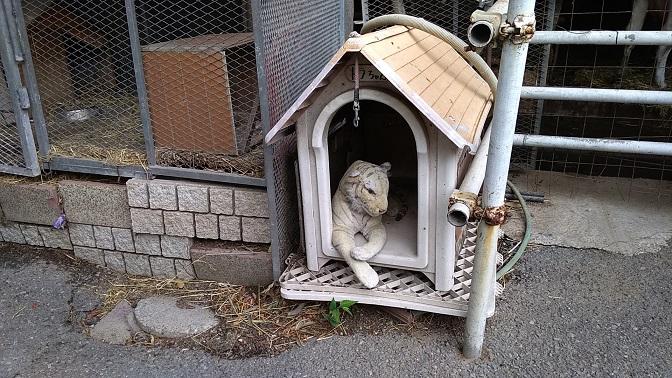 榎本牧場犬?