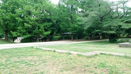 昭和記念公園芝生