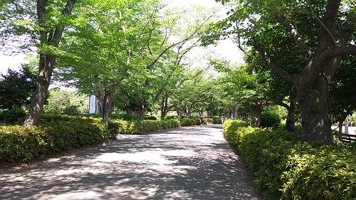 丸山公園道