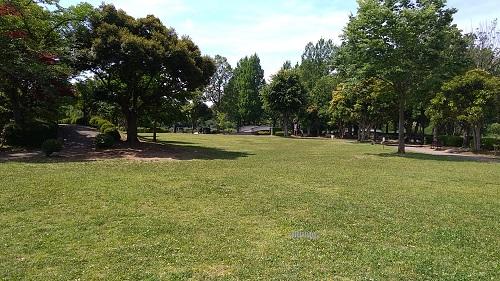 上尾丸山公園芝生広場