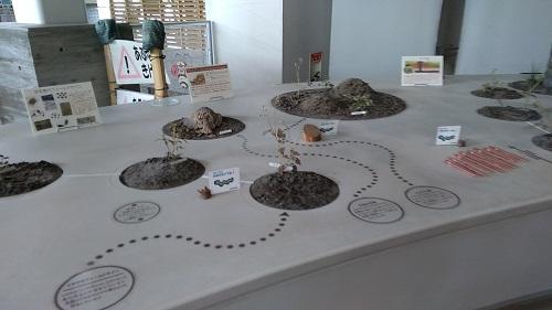 自然学習館の展示物