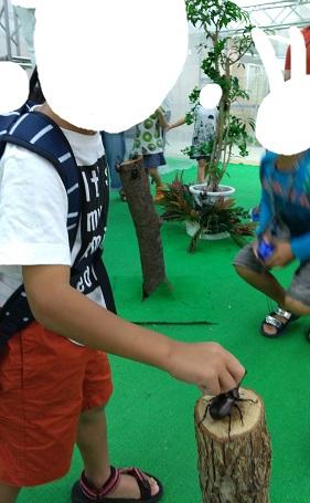 昆虫の森のカブトムシ