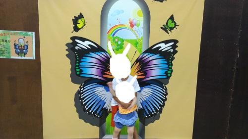 インスタ映え蝶々