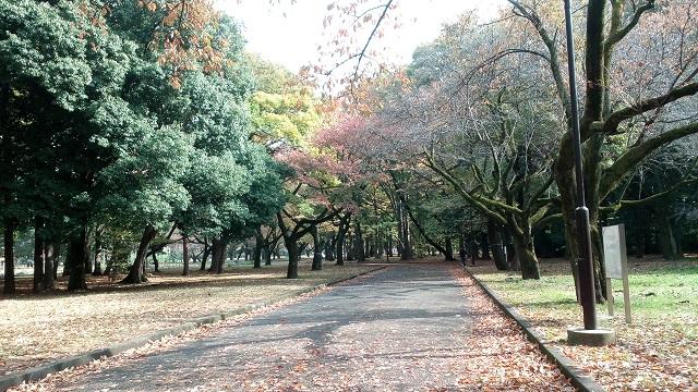 東京小金井公園道