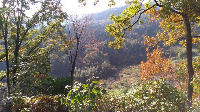 みかん狩りの景色