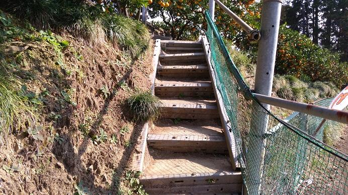 みかん狩り階段