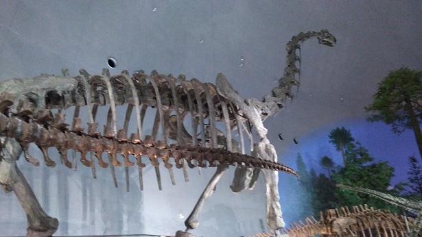 一番大きい恐竜