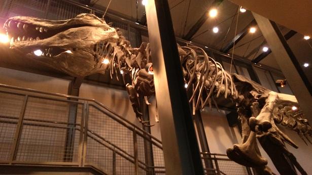 触れる恐竜