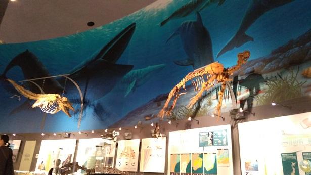 哺乳類時代の海