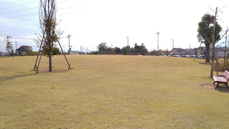 大きな芝生エリア