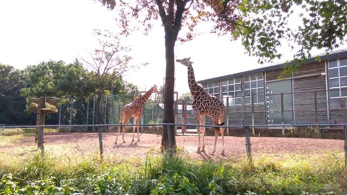 キリンこども動物自然公園