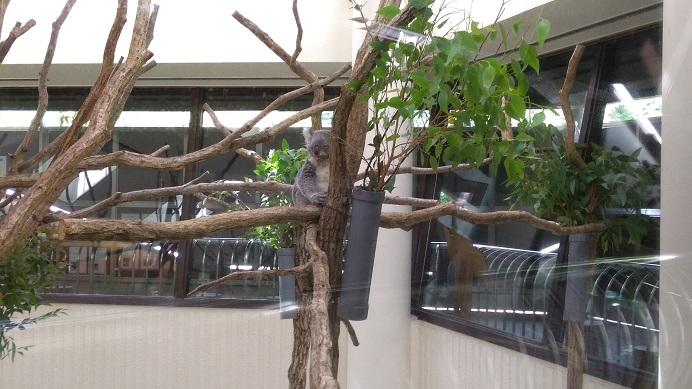 大人気コアラこども動物自然公園