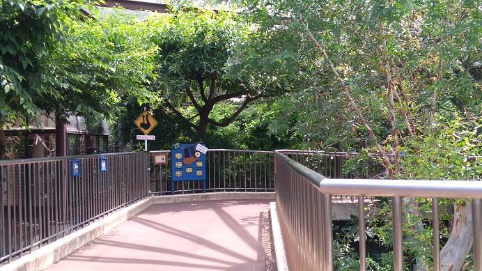 コアラ舎の奥には亀
