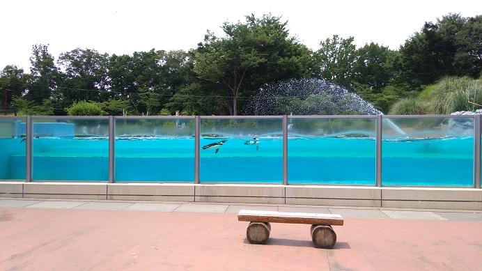 ペンギンコーナーこども動物自然公園