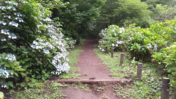 智光山公園の道