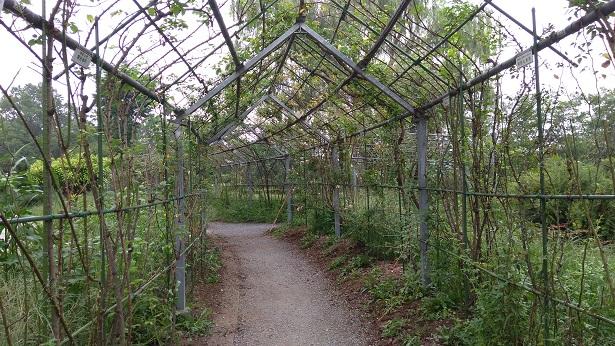 バラの小径トンネル