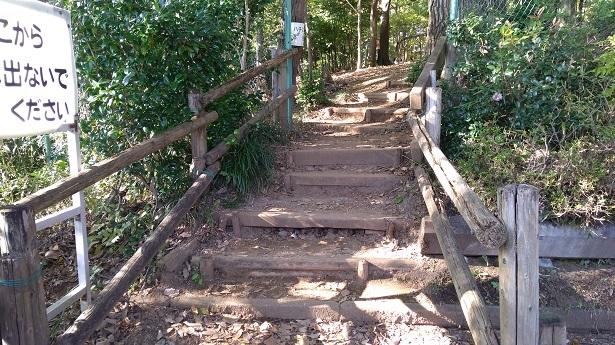 アスレチック広場に向かう階段