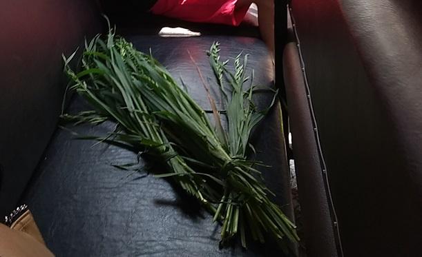 群馬サファリパーク餌の葉っぱ