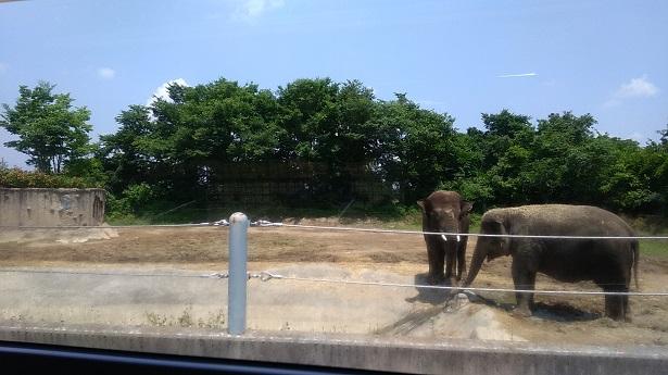 象 ゾウさん群馬サファリパーク