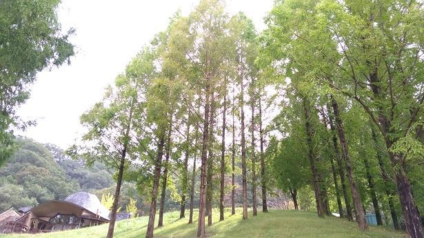あけぼの子どもの森公園の木