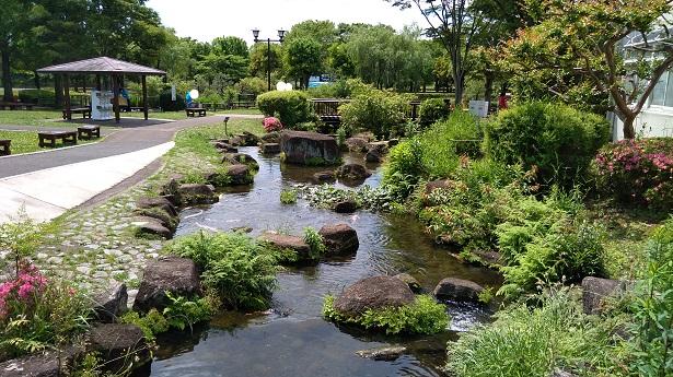 ニシキゴイ池と繋がる川