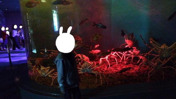 深海コーナーカニ