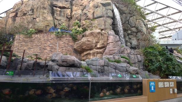 淡水魚の水槽