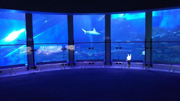 水族館大きな水槽
